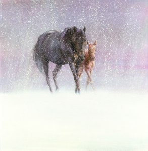 Januarys Foal_